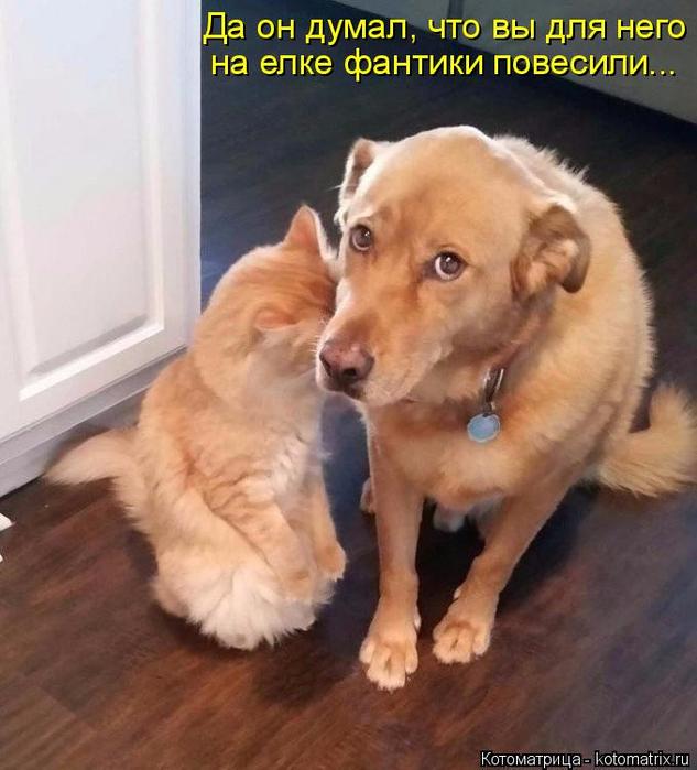 kotomatritsa_8 (633x700, 357Kb)