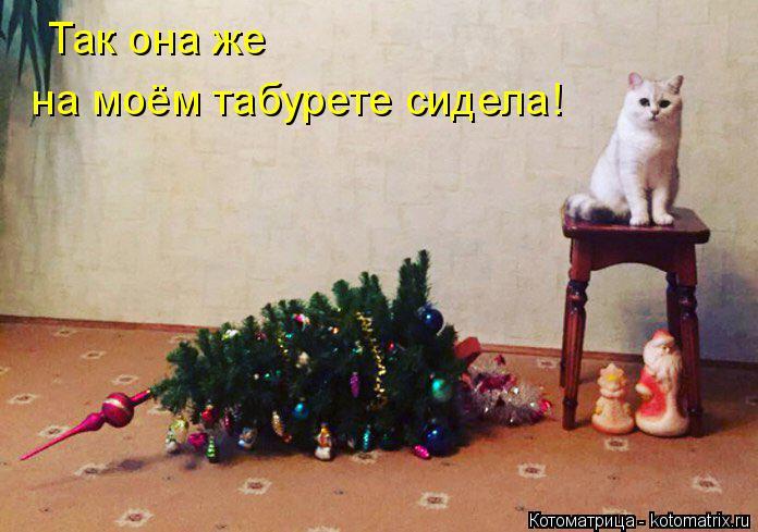 kotomatritsa_T (696x489, 258Kb)
