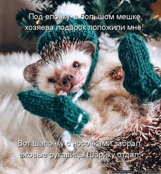 kotomatritsa_b (649x700, 539Kb)