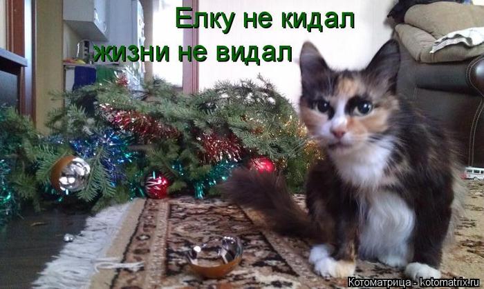kotomatritsa_V7 (700x419, 316Kb)