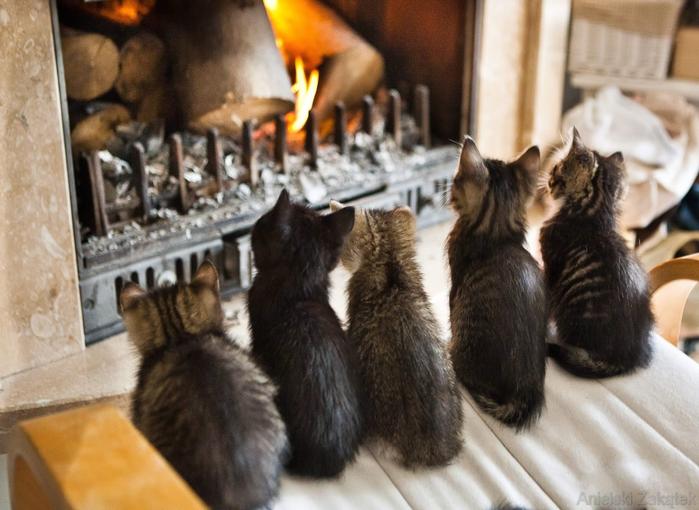 Кошка-в-вашем-доме (700x510, 362Kb)