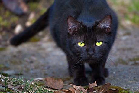 черный кот1 (460x307, 104Kb)