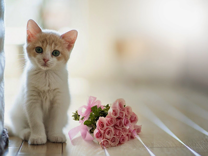 white-cat-near-roses-bouquet-colorful-attractive-free-download-wallpaper (700x525, 270Kb)