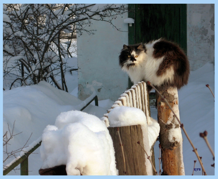 09_snow_cats (700x574, 407Kb)