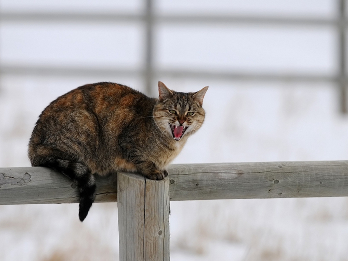 cat_fence_cry_sit_winter_snow_72263_1400x1050 (700x525, 240Kb)