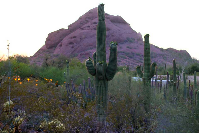 1471618920_the_desert_botanical_garden_in_phoenix_az_12 (700x466, 263Kb)