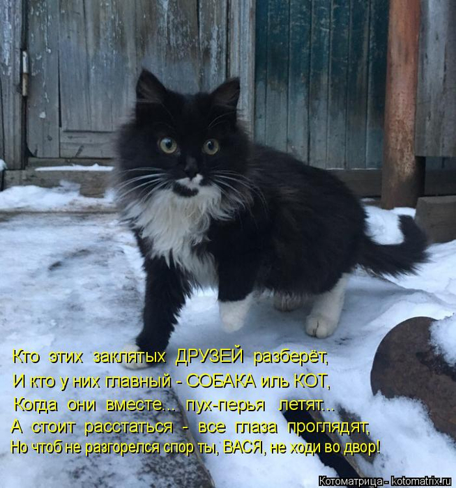 kotomatritsa_eK (654x700, 438Kb)