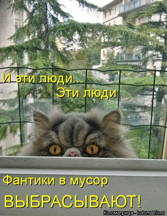 kotomatritsa_Ha (540x700, 450Kb)