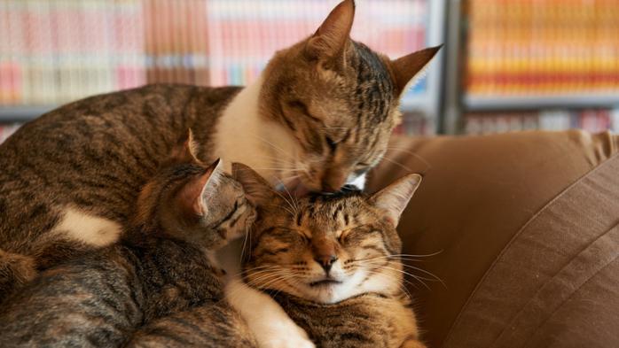 Cat-Family-1600x900 (700x393, 300Kb)