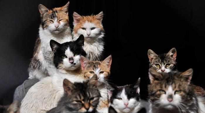ofrecen-trabajo-para-cuidar-gatos-en-una-isla-de-grecia-991x548 (700x387, 180Kb)