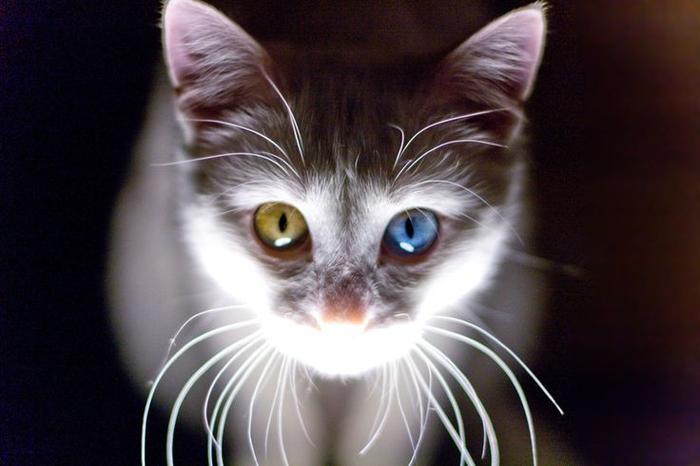 9f9fcc8d61cc2d384938c9600fecbdc1--funny-animals-adorable-animals (700x466, 251Kb)