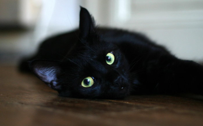 Animals___Cats__Black_cat_resting_on_the_floor_044880_ (700x437, 222Kb)