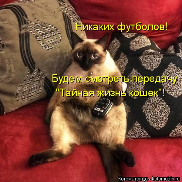 kotomatritsa_KC (600x600, 283Kb)