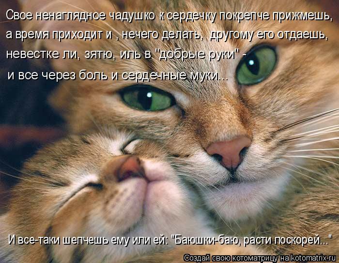 kotomatritsa_lS (700x544, 321Kb)