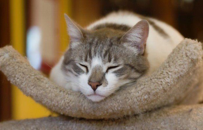sleeping_cats_39 (699x450, 165Kb)
