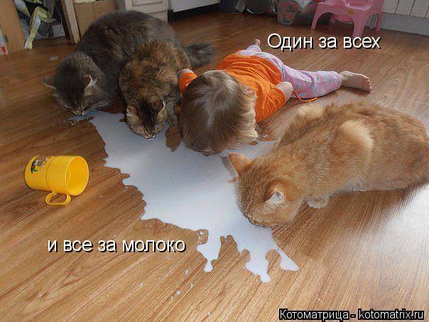kotomatritsa_mA (604x453, 226Kb)