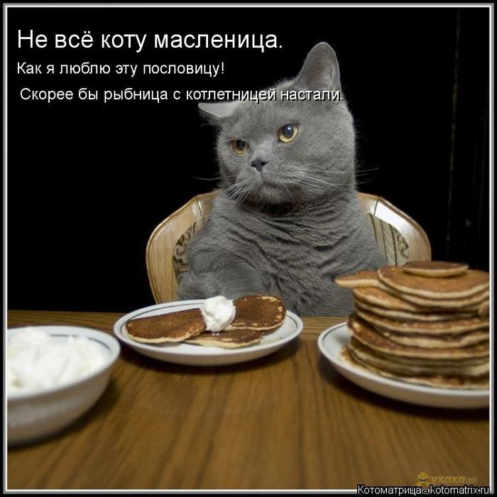 kotomatritsa_q (700x700, 292Kb)