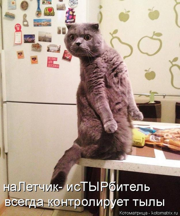 kotomatritsa_b (583x700, 366Kb)