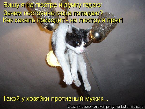 kotomatritsa_C (600x450, 208Kb)