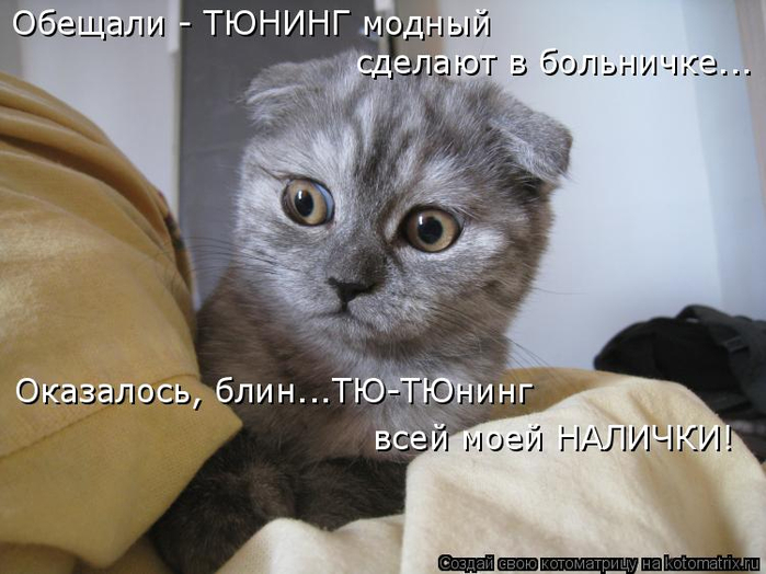 kotomatritsa_J (700x524, 296Kb)