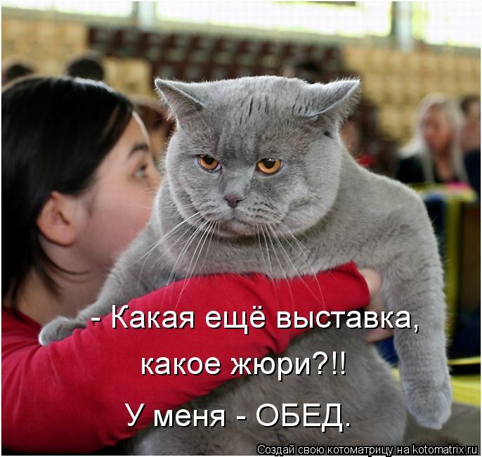 kotomatritsa_V (686x650, 265Kb)