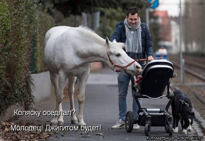 kotomatritsa_Vd (700x479, 281Kb)