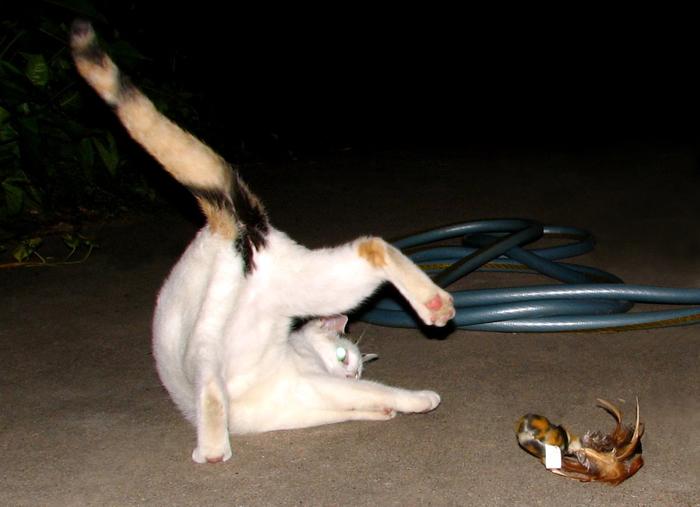 24_cats_life (700x507, 280Kb)