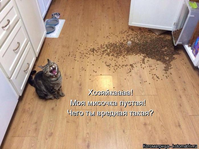 kotomatritsa_G (1) (700x524, 343Kb)