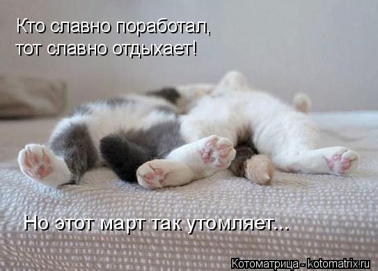kotomatritsa_U (1) (543x389, 110Kb)