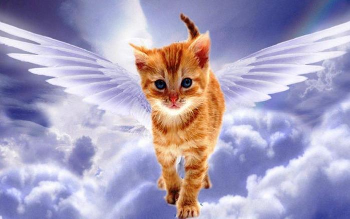 angel-cat-fantasy-wings-flying-sky-clouds-rainbow-fancy-1440x900 (700x437, 38Kb)