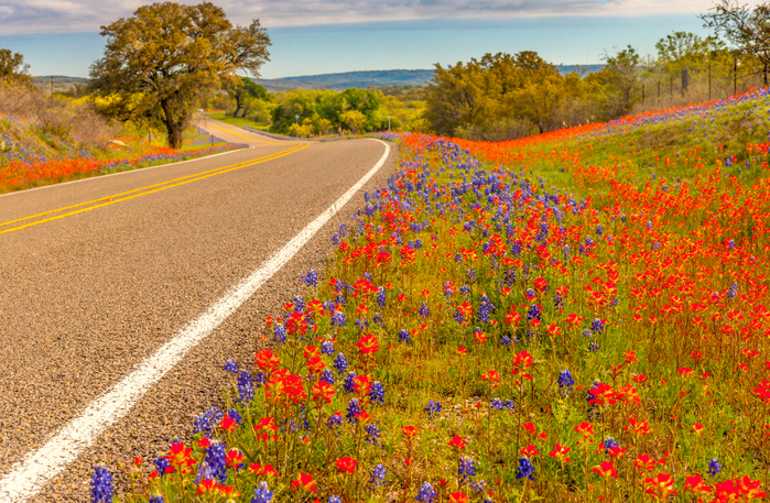 USA_Roads_Lupinus_Texas_522281_2754x1800 (700x457, 650Kb)