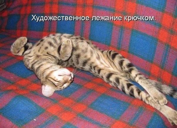 1946684_cats (600x433, 237Kb)