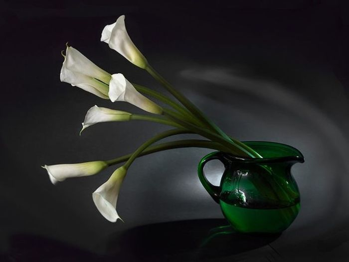 8ea57528097ca74fca637ac3b3d8b779--calla-lily-desktop-wallpapers (700x525, 24Kb)