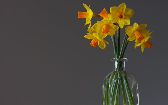 daffodils-12_my_photos_by (700x437, 21Kb)
