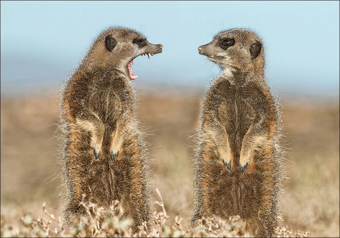 comedy-wildlife-photo-006 (700x490, 85Kb)