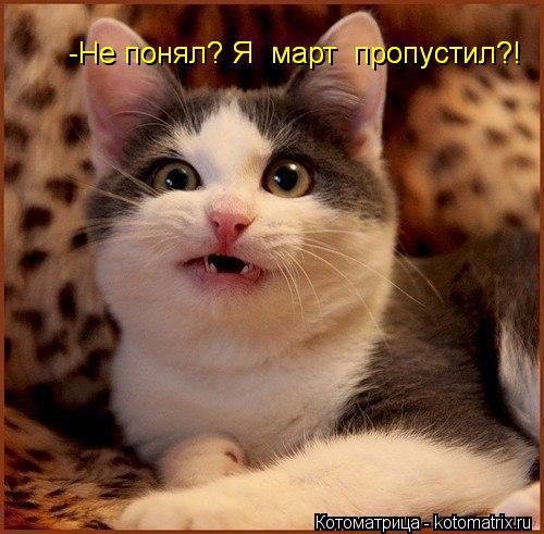 kotomatritsa_P0 (500x491, 204Kb)