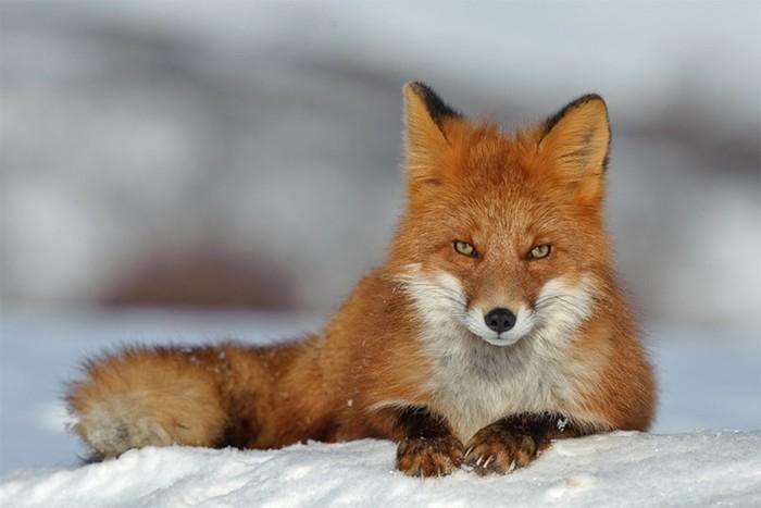 Животные в русских народных сказках