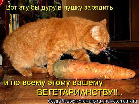 kotomatritsa_C (489x367, 200Kb)