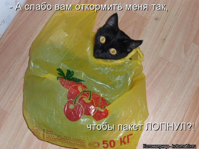 kotomatritsa_H (1) (700x524, 349Kb)