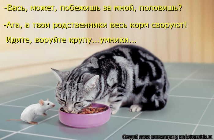 kotomatritsa_k (700x457, 266Kb)