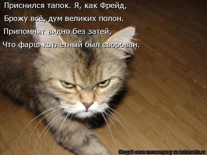 kotomatritsa_LZ (700x524, 300Kb)