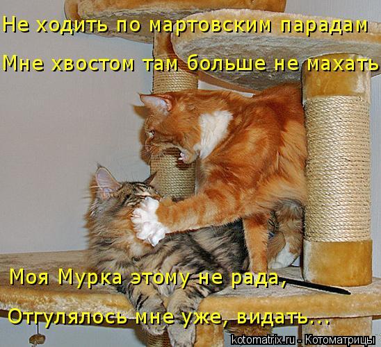 kotomatritsa_U (548x500, 279Kb)