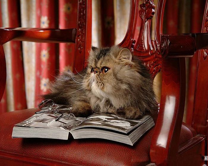 cat_68981-1280x1024 (700x560, 413Kb)
