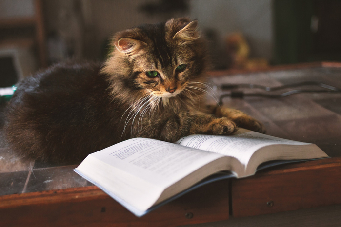 Learning-to-Cat-A-Practical-Guide-to-Kitten-Training (700x466, 274Kb)