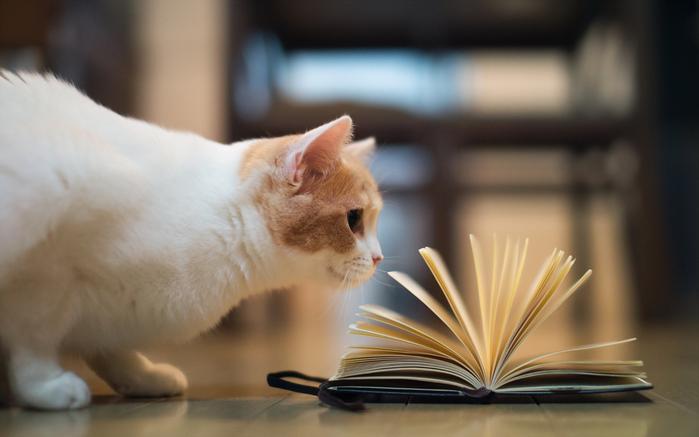 Animals___Cats_____Cat_plays_book_087816_ (700x437, 244Kb)