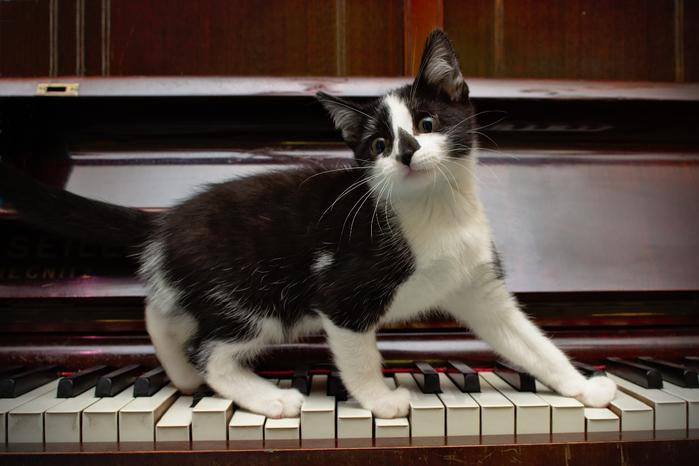kotenok-pianino-klavishi-6373 (700x466, 337Kb)
