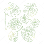 Превью depositphotos_110205994-stock-illustration-set-of-a-few-monstera (700x700, 258Kb)