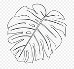 Превью kisspng-swiss-cheese-plant-leaf-drawing-sketch-monstera-5ac184c4ae62a5.8675123515226318767143 (700x653, 232Kb)