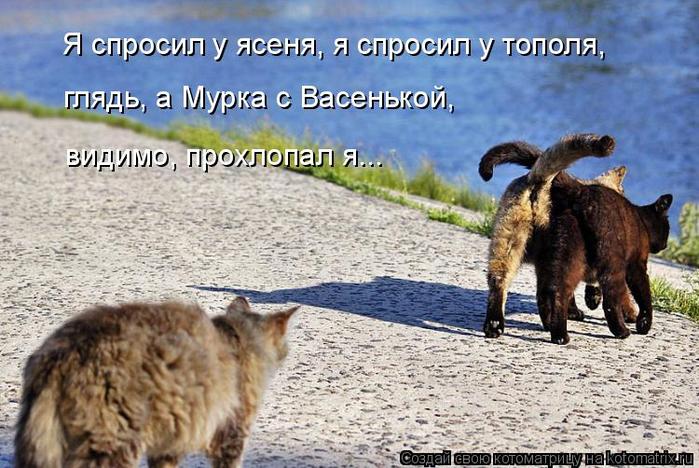 kotomatritsa_b (1) (700x468, 379Kb)