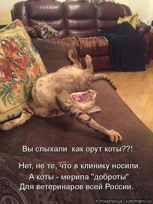 kotomatritsa_c (524x700, 359Kb)